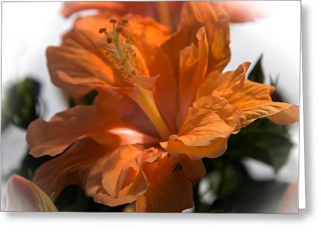Tangerine Greeting Cards - Sun Kissed  Greeting Card by Karen Wiles
