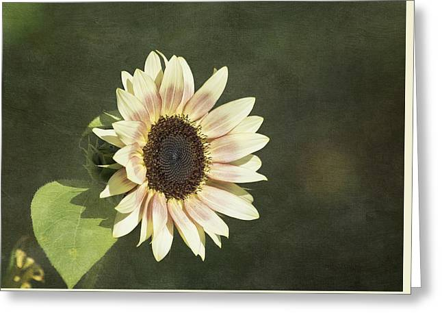 Yellow Sunflower Greeting Cards - Sun Kissed Greeting Card by Kim Hojnacki