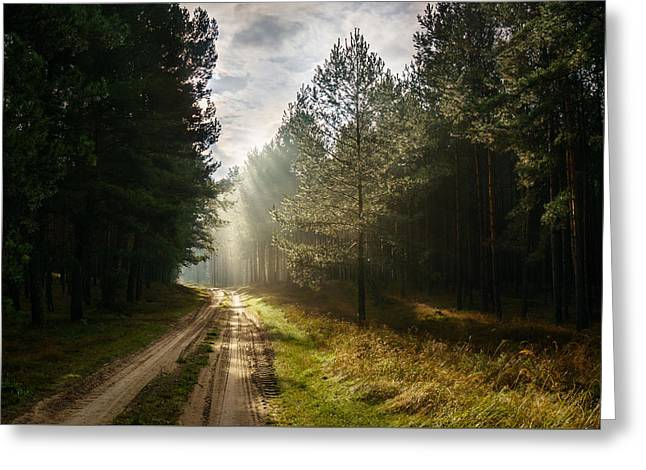 Backlit Greeting Cards - Sun light at pine forest Greeting Card by Dmytro Korol