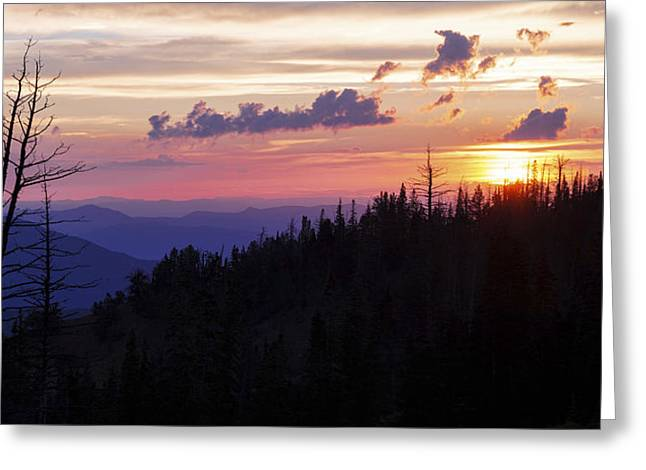Sun Over Cedar Greeting Card by Chad Dutson