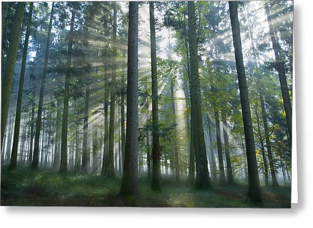 Beauty Of Nature Greeting Cards - Sun Rays in Forest Greeting Card by Silke Magino