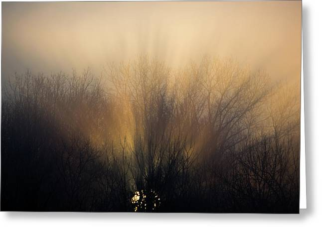 Sun Rays In The Fog Greeting Card by Flying Turkey