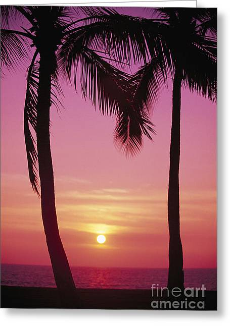 Amazing Sunset Greeting Cards - Sun Sets Between Pams Greeting Card by Carl Shaneff - Printscapes
