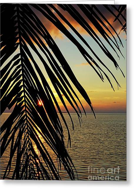 Best Sellers -  - Trees Reflecting In Water Greeting Cards - Sun setting over the sea seen through a silhouetted coconut palm frond Greeting Card by Sami Sarkis