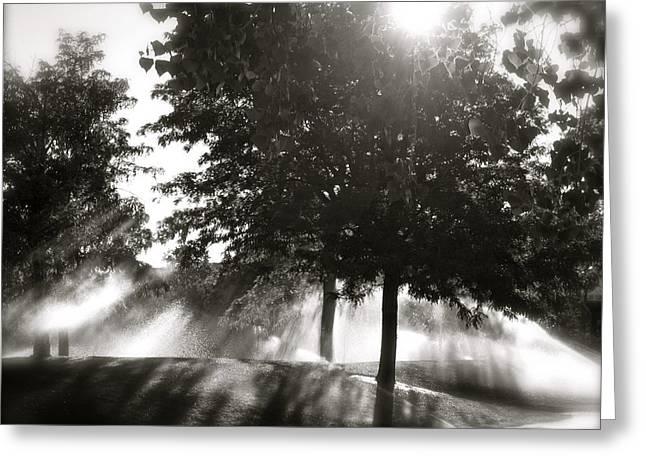 Raining Greeting Cards - Sun Showers Greeting Card by Mark David Gerson