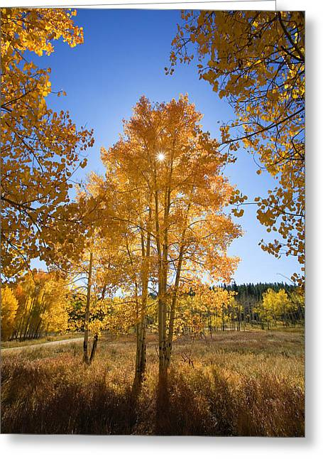 Ron Woods Greeting Cards - Sun Through Aspens Greeting Card by Ron Dahlquist - Printscapes