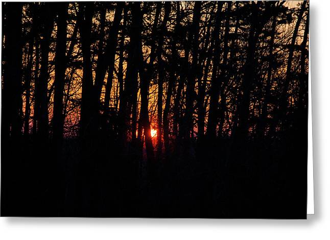 Sun Through The Woods Greeting Card by Flying Turkey