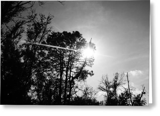 Drysdale Greeting Cards - Sun Through Trees  Greeting Card by TJ Drysdale