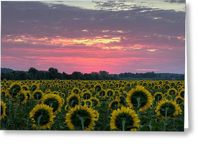 Recently Sold -  - Yellow Sunflower Greeting Cards - Sun Worshipers  Greeting Card by Dawn  Loehr