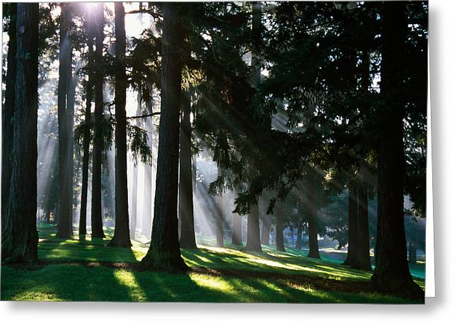 Bursting Greeting Cards - Sunbeams Through Misty Trees, Oregon Greeting Card by Panoramic Images