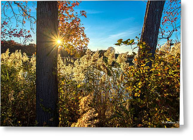 Illuminate Greeting Cards - Sunburst And Nature Greeting Card by Brian Wallace