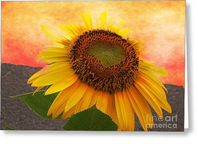 Harvest Art Greeting Cards - Sunburst Flower Greeting Card by Beverly Guilliams