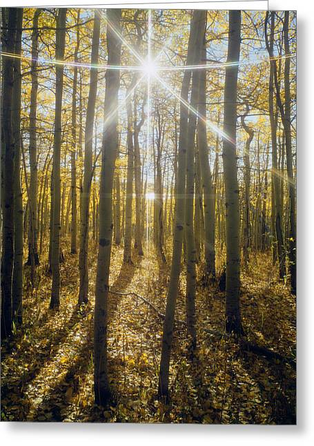 Rocks Greeting Cards - Sunburst in Aspens 107002-A Greeting Card by Ed  Cooper Photography
