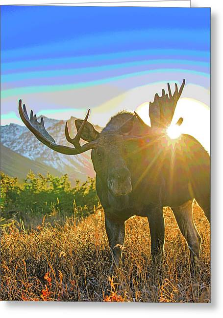 Sunburst In The Antler Abstract 1 Greeting Card by Tim Grams