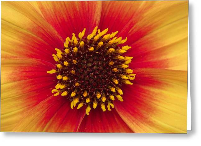Sunburst Greeting Card by Hazy Apple