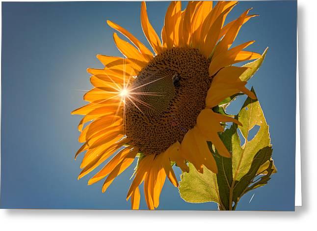 Sunburst Greeting Card by Rick Berk