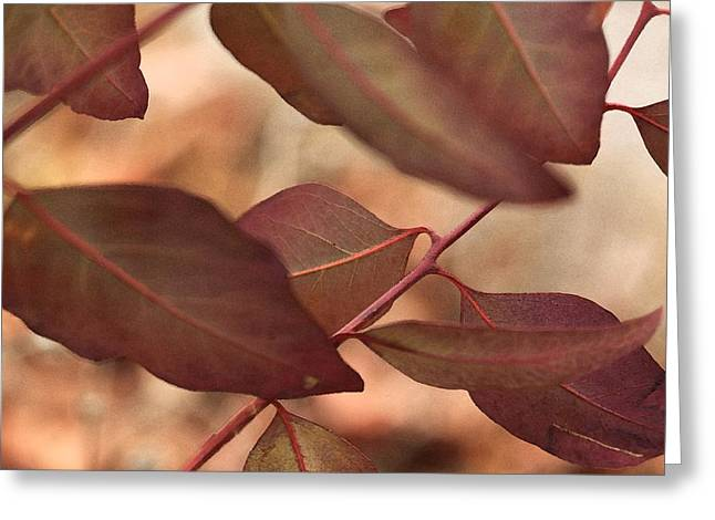 Eucalyptus Greeting Cards - Sunday Greeting Card by Amy Neal