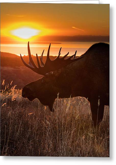 Sunet Silhouette Greeting Card by Tim Grams
