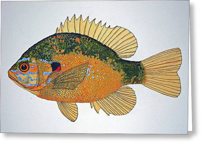Sunfish South Usa Greeting Card by Don Seago