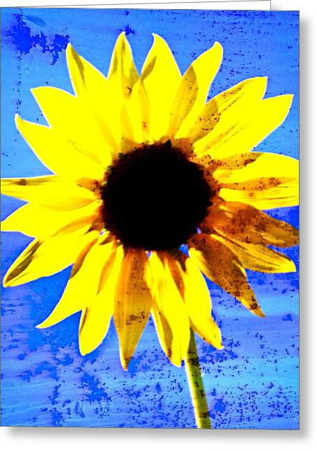 Marty Koch Greeting Cards - Sunflower 12 Greeting Card by Marty Koch