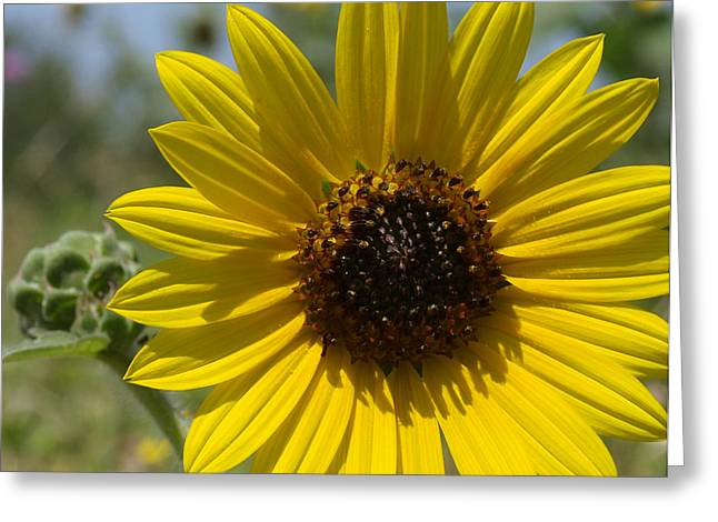 Sunflower 9  Greeting Card by James Granberry