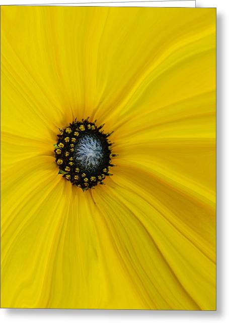 Abstract Sunflower Greeting Cards - Sunflower Abstract Greeting Card by Ernie Echols