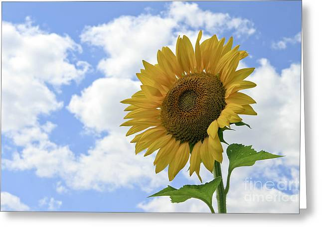Yelllow Greeting Cards - Sunflower and Clouds Greeting Card by Teresa Zieba