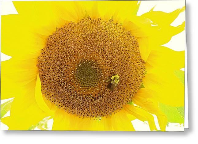 Maine Farms Greeting Cards - Sunflower and the Happy Bee Greeting Card by Lisa Gilliam