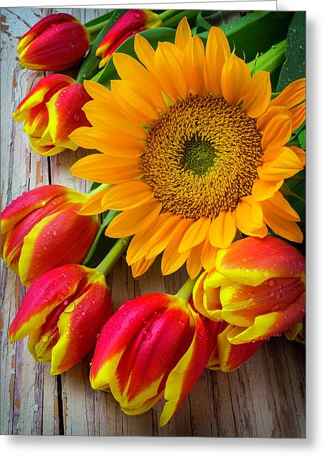 Sunflower And Tulips Greeting Card by Garry Gay