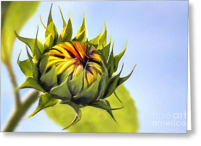 Yellow Sunflower Digital Greeting Cards - Sunflower bud Greeting Card by John Edwards