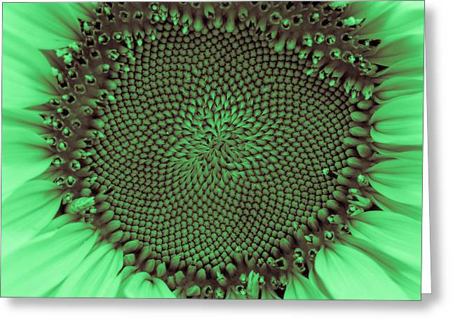 Nature Center Greeting Cards - Sunflower Centered Green Greeting Card by Terry DeLuco