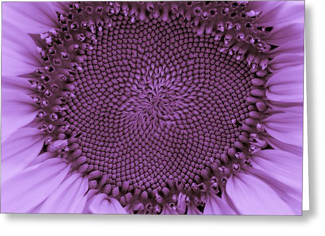 Nature Center Greeting Cards - Sunflower Centered Purple Greeting Card by Terry DeLuco