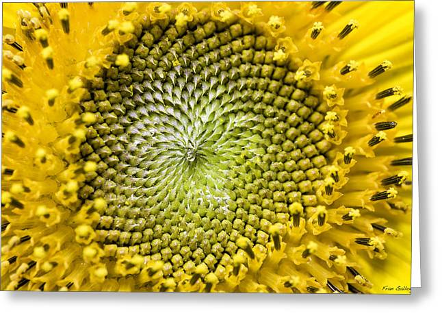 Sunflower Central Greeting Card by Fran Gallogly
