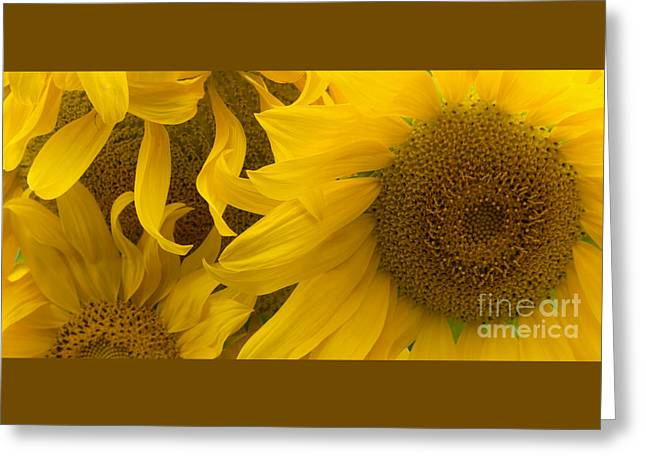 Greeting Cards - Sunflower Crowd Greeting Card by Ann Horn
