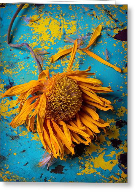 Sunflower Decay Greeting Card by Garry Gay