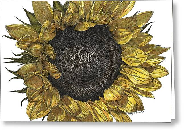 Live Art Greeting Cards - Sunflower Drawing in Color Greeting Card by William Beauchamp