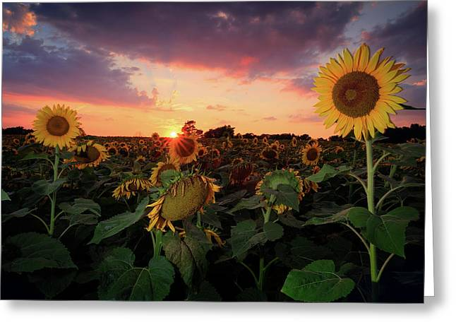 Maine Farms Greeting Cards - Sunflower field 2  Greeting Card by Emmanuel Panagiotakis
