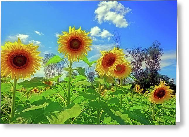 Field. Cloud Greeting Cards - Sunflower Field Greeting Card by Rodney Campbell