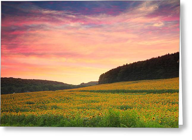 Maine Farms Greeting Cards - Sunflower field sunset  Greeting Card by Emmanuel Panagiotakis