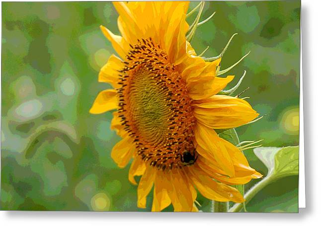 Floral Digital Art Digital Art Greeting Cards - Sunflower Fun Greeting Card by Suzanne Gaff