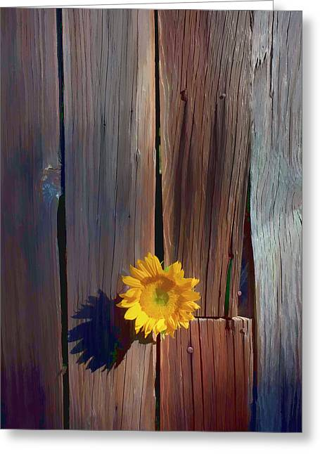 Nature Center Greeting Cards - Sunflower in barn wood Greeting Card by Garry Gay