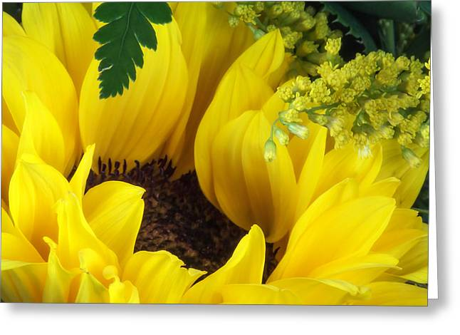 Annuals Greeting Cards - Sunflower Macro Greeting Card by Tom Mc Nemar