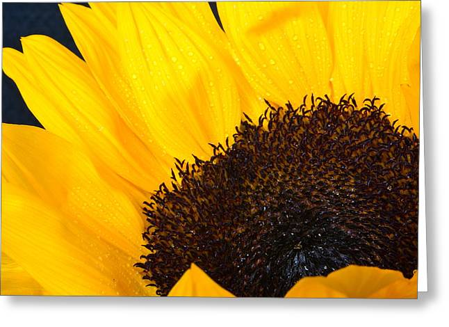 Nature Study Greeting Cards - Sunflower Magic Greeting Card by Valerie Cozart