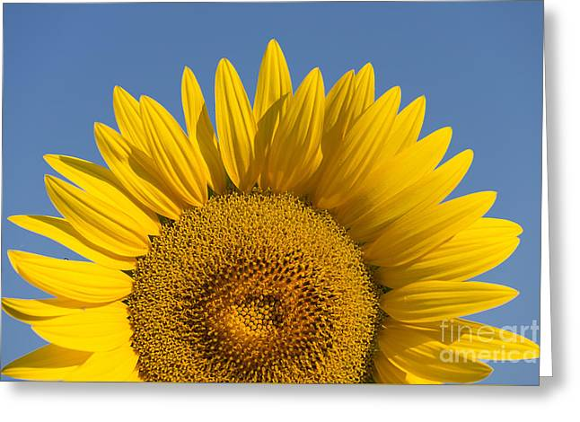 Tuscan Sunset Greeting Cards - Sunflower Greeting Card by Maurizio Martini