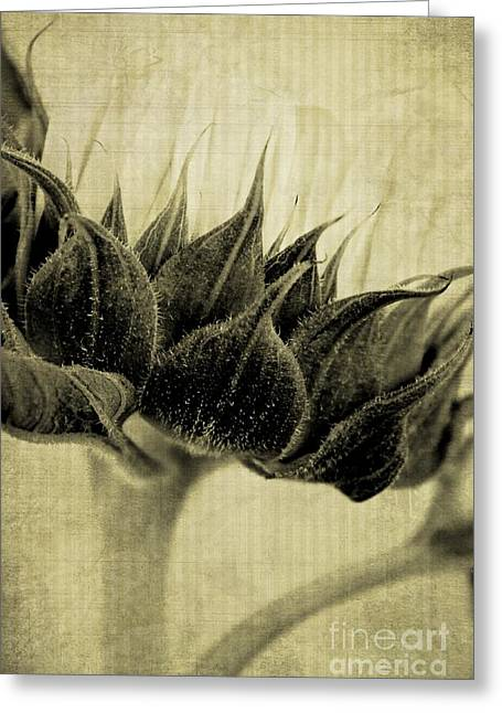 Abstract Nature Greeting Cards - Sunflower Nostalgia Greeting Card by Clare Bevan