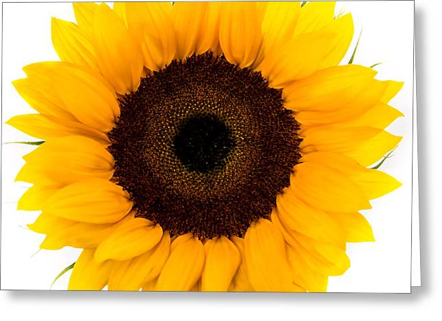 Square Format Greeting Cards - Sunflower Greeting Card by Olga Photography