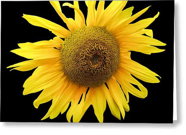 Greeting Cards - Sunflower on Black Greeting Card by Martin Wall