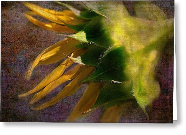 Side View Mixed Media Greeting Cards - Sunflower On The Side Greeting Card by Bellesouth Studio