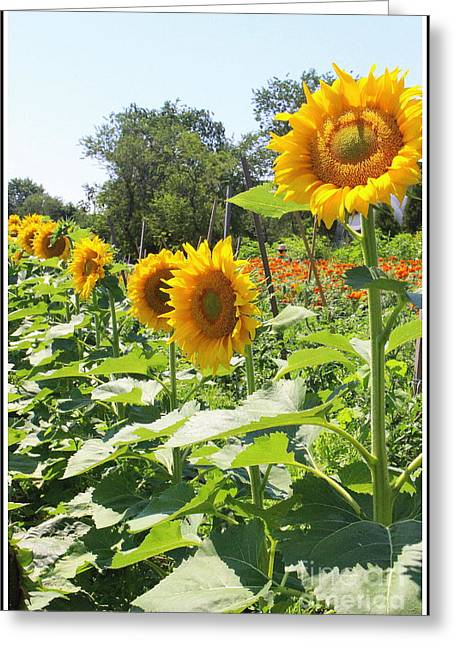 Decorate Greeting Cards - Sunflower Parade Greeting Card by  Photographic Art and Design by Dora Sofia Caputo