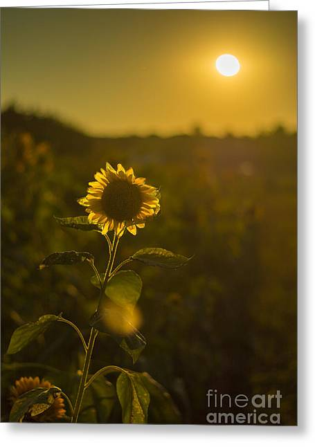 Sunflower Patch Digital Art Greeting Cards - Sunflower Patch Sillhouette Greeting Card by Alissa Rosenberg